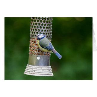 pájaros fotográficos de la fauna tarjeta de felicitación