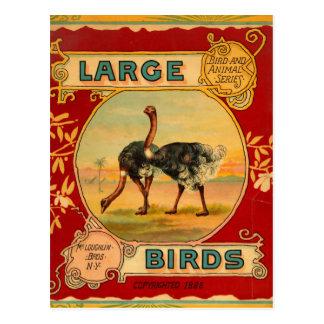 Pájaros grandes postal