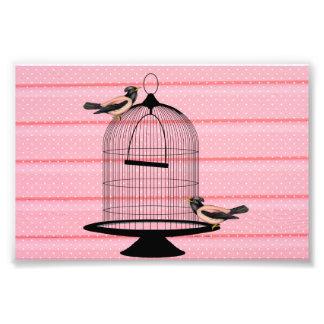 pájaros hermosos del rosa del vintage y lunar lind fotografias