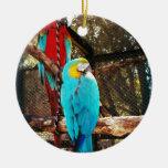 Pájaros hermosos ornamentos de reyes magos