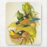 Pájaros Largo-atados vintage de Mousepad Broadbill Tapetes De Raton