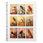 Pájaros Libros De Apuntes