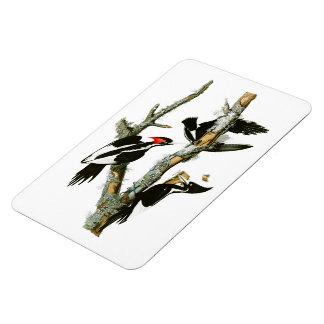 pájaros Marfil-cargados en cuenta de Audubon de la Imanes De Vinilo