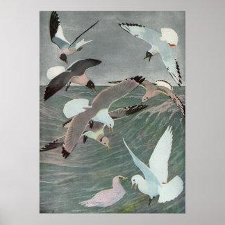 Pájaros marinos del vintage, gaviotas que vuelan póster