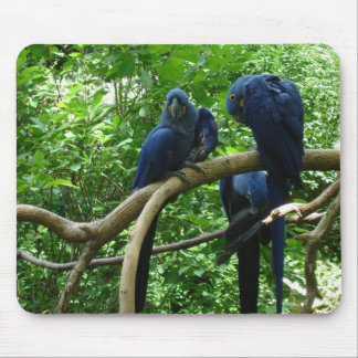Pájaros Mousepad del Macaw Alfombrilla De Raton