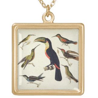 Pájaros nativos, incluyendo el Toucan (centro), Am Collar Dorado