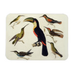 Pájaros nativos, incluyendo el Toucan (centro), Am Iman De Vinilo
