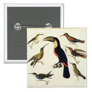 Pájaros nativos, incluyendo el Toucan (centro), Am Pin Cuadrada 5 Cm