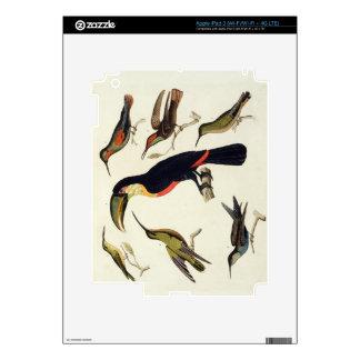 Pájaros nativos, incluyendo el Toucan (centro), Am iPad 3 Pegatinas Skins