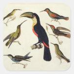 Pájaros nativos, incluyendo el Toucan (centro), Calcomanías Cuadradases