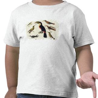 Pájaros nativos, incluyendo el Toucan (centro), Camisetas