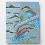 pájaros naturales placas con fotos
