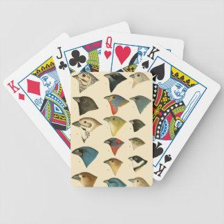 Pájaros norteamericanos barajas de cartas