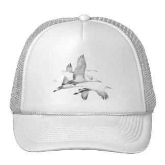 Pájaros oca gorras