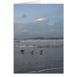 Pájaros ocupados en la tarjeta de nota de la playa