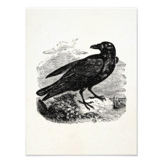 Pájaros personalizados cuervo del pájaro del negro cojinete
