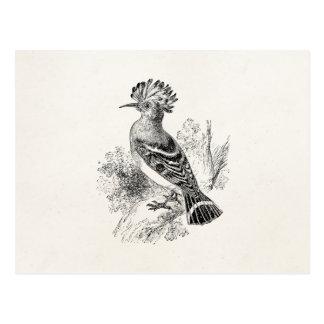 Pájaros personalizados pájaro del Hoopoe de Postal