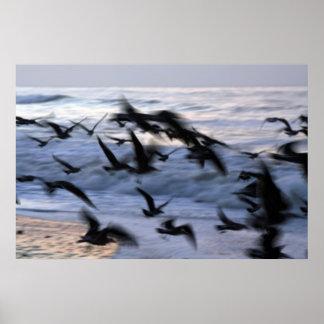 pájaros póster