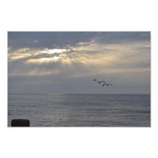 Pájaros que vuelan apagado en la puesta del sol impresiones fotograficas