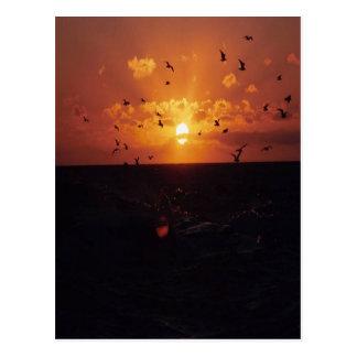 pájaros que vuelan en la puesta del sol, en una po tarjeta postal