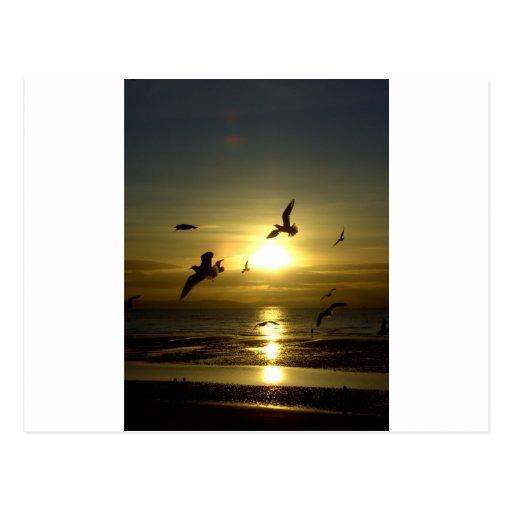 Pájaros que vuelan en la puesta del sol postal