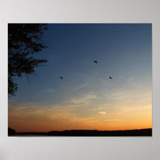 Pájaros que vuelan en la puesta del sol póster