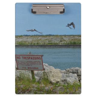 pájaros que vuelan la Florida ninguna muestra