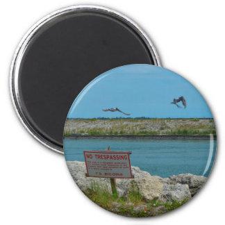 pájaros que vuelan la Florida ninguna muestra Imán Redondo 5 Cm