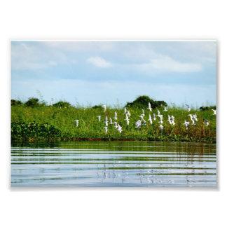 Pájaros que vuelan sobre el agua arte con fotos