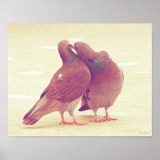 Pájaros retros del amor de la paloma que besan la póster