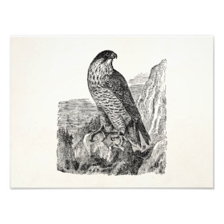 Pájaros retros personalizados del halcón de fotografías