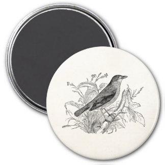 Pájaros retros personalizados pájaro del usignuolo