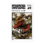 Pájaros rojos americanos del Crossbill en árbol de Sello