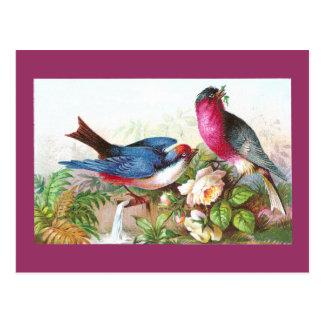 Pájaros, rosas y tromba marina coloridos postales
