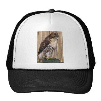 Pájaros salvajes: Halcón Rojo-Atado Gorros Bordados