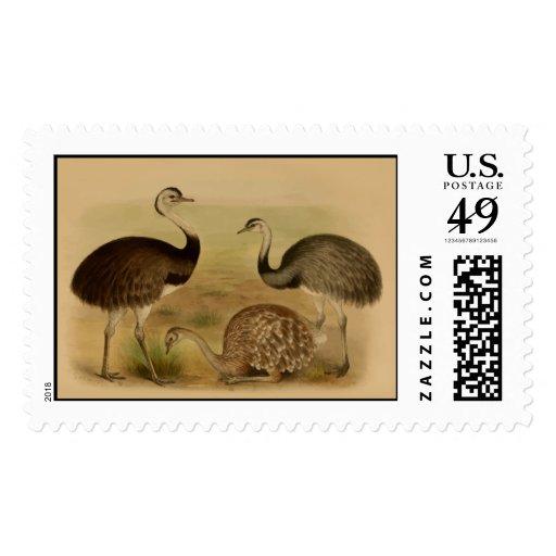 Pájaros suramericanos de Rhea del vintage Timbres Postales