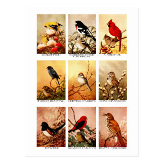 Pájaros Tarjetas Postales