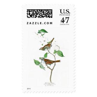 Pájaros Throated blancos América de Juan Audubon Timbres Postales