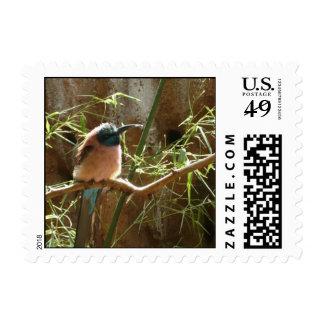 Pájaros tropicales de los sellos