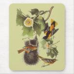 Pájaros Troupial Oriole Mousepad de Audubon del vi Alfombrilla De Ratones