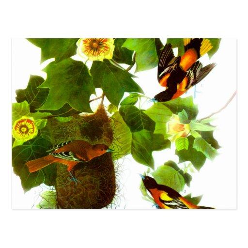 Pájaros y flores del día de primavera del vintage tarjetas postales