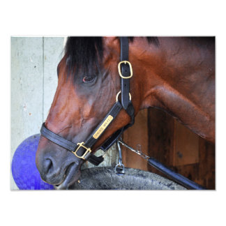 Palace Malice by Curlin Photo Print