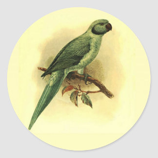 Palaeornis Exsul Small Round Stickers
