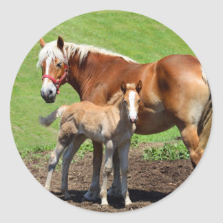 Palamino Horse and Foal Stickers