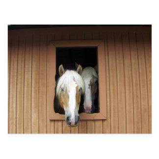 Palamino Horses in a Barn in Colorado Postcard