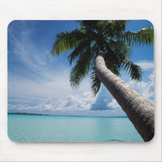 Palau, Micronesia, Palm tree at Palau Lagoon Mouse Pad