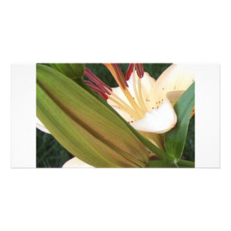 Pale Apricot Lily Photo Cards