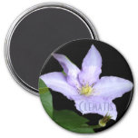 Pale Blue Clematis Magnets