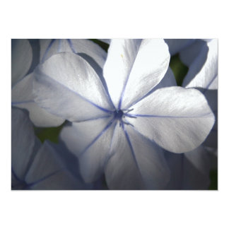 Pale Blue Plumbago Flower Close Up 5.5x7.5 Paper Invitation Card