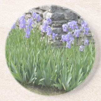 Pale Blue Purple Iris Flowers by a Limestone Wall Drink Coaster